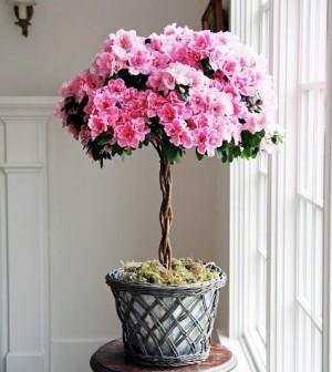 Foto: acountryfarmhouse.blogspot.com